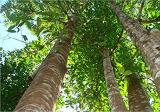 Agarwood trees Rubber tree Durian tree Land for sale - Property For Sale in Malaysia