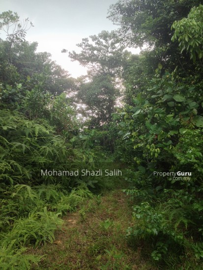 Agri Land With Oud Plantation, Sepang, 1.66 acre FOR SALE  123940550