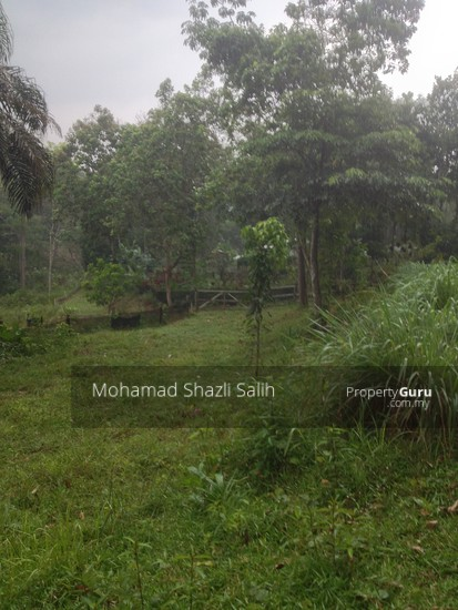 Agri Land With Oud Plantation, Sepang, 1.66 acre FOR SALE  123940559