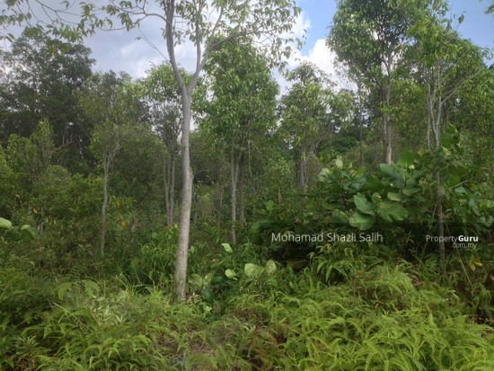 Agri Land With Oud Plantation, Sepang, 1.66 acre FOR SALE  123940577