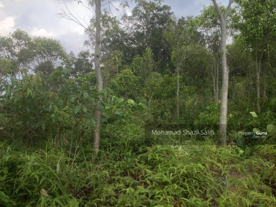 Agri Land With Oud Plantation, Sepang, 1.66 acre FOR SALE  123940583
