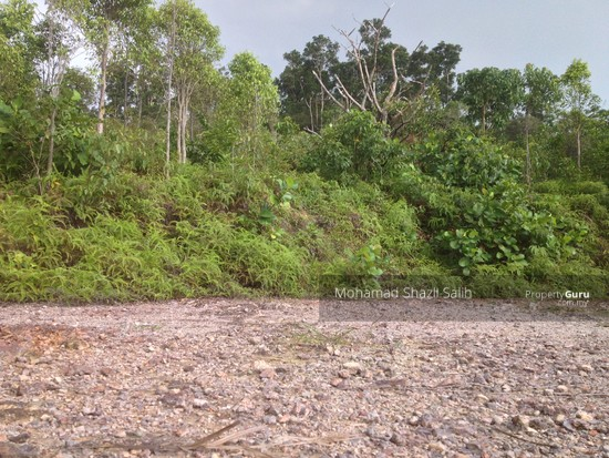 Agri Land With Oud Plantation, Sepang, 1.66 acre FOR SALE  123940619