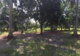 2.5 Acres Agricultural Land, Telok Gong, Port Klang - Property For Sale in Malaysia
