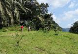 Tanah FREEHOLD  9.15acre di Junjung Kulim - Property For Sale in Malaysia
