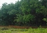 Malay Reserve Agriculture Land Near MRR2 Highway - Property For Sale in Malaysia