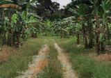 Simpang Rengam Agriculture Fruit Farm Land - Property For Sale in Malaysia