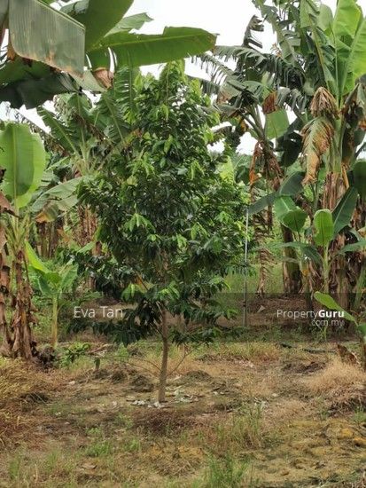 Simpang Rengam Agriculture Fruit Farm Land  150088171