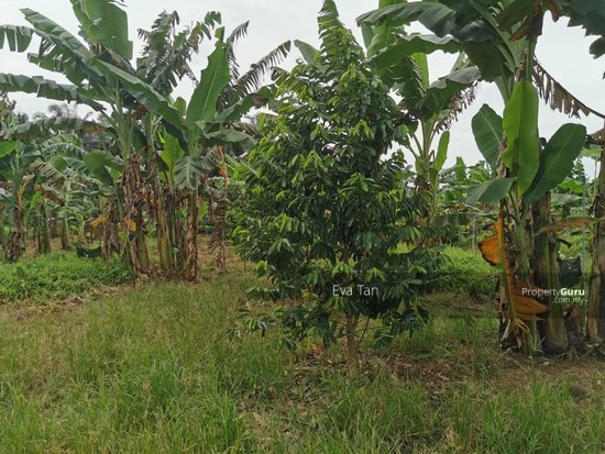 Simpang Rengam Agriculture Fruit Farm Land  150088180