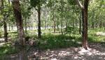 Padang Chempa, Pauh, Perlis