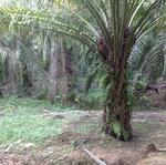 Residential Land 1.23 acre, Merlimau, Malacca