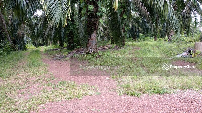 (Palm Oil Land + Swallow House )Urgent Sale  5.18 Acres At Gemas Bahru,Negeri Sembilan #148296282