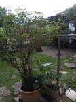 Corner 2 storey house with big land in Taman Tun Dr Ismail , Kuala Lumpur